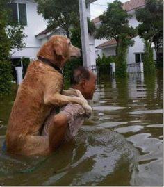 friend in need..this is such a beautiful image caught in an ugly disaster