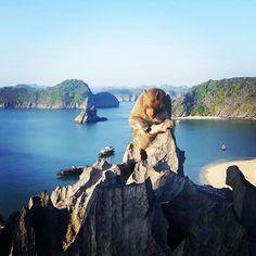 Bahía de Ha Long. Vietnam. #ocitrip #ocitripclientes #misclientes #clientesporelmundo #vietnam #agenciadeviajes #halong #vacaciones2016 #holidays