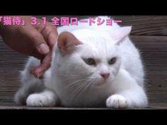 玉之丞さまの猫萌え動画12―映画「猫侍」メイキング - YouTube 「出番でございます、玉之丞さま」。スタンバってる玉之丞さま。 Samurai Warrior, Warrior Cats, 21 Years Old, Pusheen, Neko, Videos, Funny Cats, Kittens, Japanese