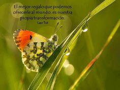 ... El mejor regalo que podemos ofrecer al mundo, es nuestra propia transformación. Lao Tsé.