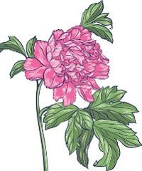 A peony tattoo is a good choice for those tattoo lovers who are looking for a truly fascinating tattoo with a deep symbolic meaning. Peony tattoos are believed to be a representative of wealth and fortune. Eps Vector, Vector Art, Pink Peonies, Peony, Peonies Tattoo, Flower Artwork, Japanese Flowers, Art Icon, Free Illustrations