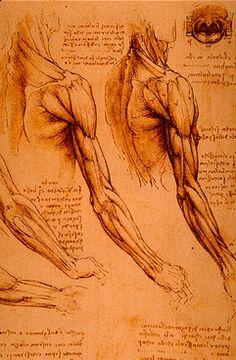 Il 2 maggio 1519 muore in Francia Leonardo da Vinci. Lo ricordiamo con uno dei suoi disegni anatomici.