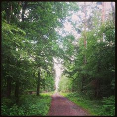 Into the German forest near Offenbach