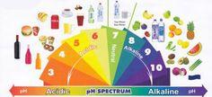 Il nostro corpo ha bisogno di avere un pH leggermente alcalino, poichè l'acidità è dannosa per la salute. Un corpo acido è adatto per la crescita di batter