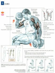 Best workout routine for big biceps - the 7 of my favorite workouts gaining huge biceps. Simple and effective workout routine for best results Sport Fitness, Muscle Fitness, Mens Fitness, Fitness Models, Biceps Workout, Gym Workouts, Forearm Workout, Trx Workout, Big Biceps