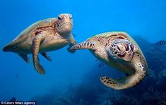 Meet Turtle Pals Casey And Shelly!
