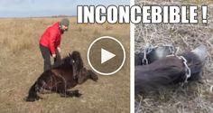 Diariamente vemos muchas injusticias cometidas contra los animales, pero lo que sucedió con éste inocente caballo fue algo realmente difícil de creer que en pleno siglo 21 suceda…