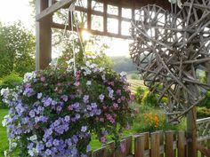 #Zomer in onze tuin #prieeltje #tuinhuisje #limburg #summer #flowers