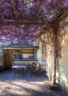 decorative wrought iron bracket supports the weight of the wisteria vine over the patio. very elvish! I mostly just love the wisteria!