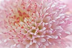 Nursery Art Pastel Flower photograph 8x12 by AnaPontesPhotography, $21.00