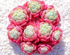 30 Succulents For Green Life - Travelaroundworld Succulent Gardening, Garden Terrarium, Succulent Terrarium, Cacti And Succulents, Planting Succulents, Garden Plants, Indoor Plants, House Plants, Terrariums
