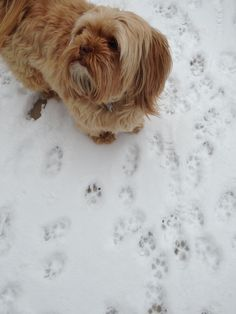 Are they still considered foot prints or paws.