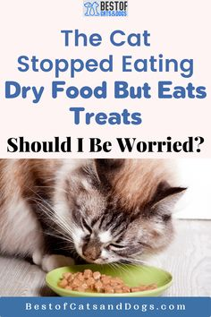The Cat Stopped Eating Dry Food But Eats Treats. Perhaps the reason why your cat does not want to eat dry food is that she is not finding it tasty. This is a common problem especially if you do not buy high-quality cat food or the food is...Read more here! #cat #cats #kittens #catfood #drycatfood #wetcatfood Cat Health Care, Cat Care Tips, Dry Cat Food, Healthy Pets, Happy Animals, Stop Eating, Cats And Kittens, Cute Cats, No Worries