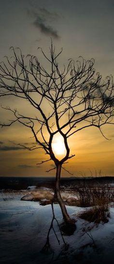 The last tree died...