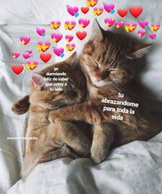 Read 🐾cuarenta y uno from the story ♡̷̷ꦿmemes soft! Cute Cat Memes, Cute Love Memes, Funny Cute, Funny Memes, Cartoon Jokes, Stranger Things Premiere, Memes Amor, Freaky Mood Memes, Romantic Memes