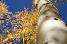 Looking up | Flickr - Photo Sharing! Looking Up, Photos, Pictures, Photographs