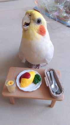PetsLady's Pick: Funny Cockatiel Meal Of The Day – Parrot Funny Birds, Cute Birds, Pretty Birds, Beautiful Birds, Animals Beautiful, Cute Baby Animals, Animals And Pets, Funny Animals, Cockatiel