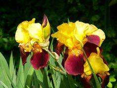 El tiempo del iris (2)