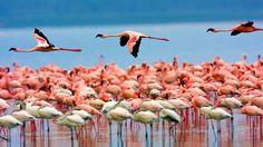 Kenyasafariholiday is a Tour operator which pride Luxury, smooth and flawless Kenya Tanzania safari holidays. Find holiday safari tour services with attractive packages. Nairobi, Santorini, Kenya, Vida Natural, Natural Beauty, Safari Holidays, Tanzania Safari, Italy Holidays, African Safari