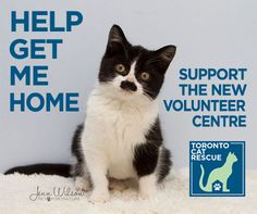 Did you know? Toronto Cat Rescue (TCR) saves more cats each year than most other local animal welfare organizations, even though we've never had a shelter or office. We know we're good at finding h…