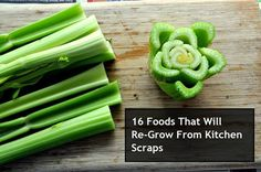 16 Foods That Will Re-Grow From Kitchen Scraps... http://www.diyhomeworld.com/16-foods-that-will-re-grow-from-kitchen-scraps/  Youll never have to purchase these herbs, fruits and vegetables again once you learn how to re-grow them from kitchen scraps. Imagine how much money you would save on your weekly grocery bill!  Click the link to find out what the 16 foods are and how you can re-grow them.