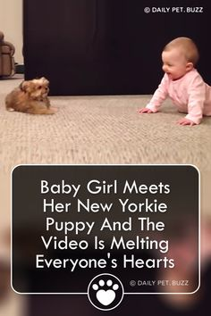 Sweet baby and her cute Yorkie puppy have a hysterical conversation. These are best buddies in the making. Funny Baby Quotes, Funny Dog Memes, Funny Animal Memes, Cute Funny Animals, Funny Animal Pictures, Cute Baby Animals, Baby Memes, Bff Quotes, Friend Quotes