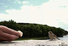 Papkaj maličký