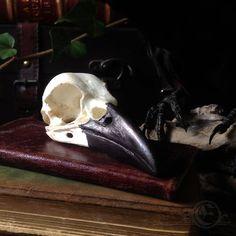 Torresian Crow Skull Replica by ArtofElorhan on Etsy