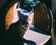 "The new Fisheye Baby 110 by #Lomography. Sample color photo. Love it :D take by ""webo29"""