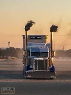 Custom Peterbilt, Peterbilt 379, Peterbilt Trucks, Show Trucks, Big Rig Trucks, Old Trucks, Heavy Duty Trucks, Heavy Truck, Train Truck