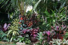 La recopilación de jardines tropicales más espectacular
