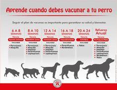 Vacunas para tu perro