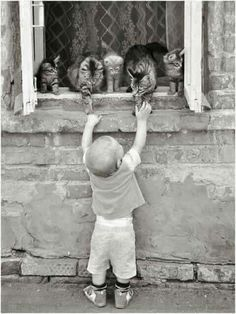 Boy and cats Animals And Pets, Animals For Kids, Baby Animals, Funny Animals, Cute Animals, Crazy Cat Lady, Crazy Cats, Amazing Animals, Photo Chat