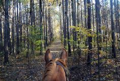 Horseback riding Cope Hollow Trail in the Deam Wilderness, Indiana