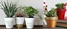 Image result for regalar plantas en navidad