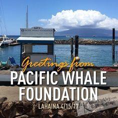 Wow #awesome #adventure #aloha -- My #fun #times #beginning  #lifeisgood #blessed #westkirkley #westphd #vacationworktrip #maui #whalewatching