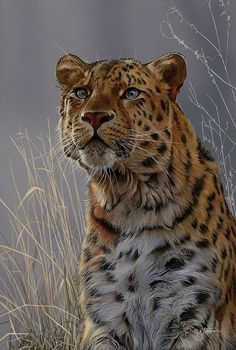 Amur Leopard  - Wildlife painting by Scot Storm