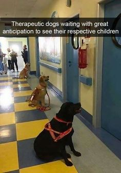 Service dogs waiting to enter children's hospital rooms for animal therapy Animals And Pets, Funny Animals, Cute Animals, Nature Animals, I Love Dogs, Cute Dogs, Sick Kids, Therapy Dogs, Service Dogs