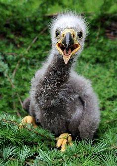 Beautiful Birds, Animals Beautiful, Wild Animal Park, Wild Park, Animal Tracks, Cute Baby Animals, Wild Animals, Animal Babies, Beautiful Creatures