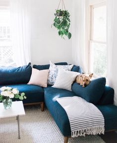 Contemporary living room design with navy mid-century sectional hanging plants and marble coffee table. After: Austin home tour by branding and web designer for lifestyle brands Cozy Living Rooms, Home Living Room, Apartment Living, Living Room Decor, Blue Couch Living Room, Apartment Interior, Studio Apartment, Living Room Inspiration, Home Decor Inspiration