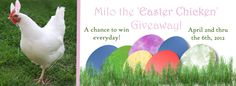 """Announcing our """"Easter Chicken"""" Giveaway beginning Monday, 4/2-6.  Win some fab prizes!  http://www.themorristribe.com/2012/03/31/the-morristribes-easter-chicken-giveaway-begins-monday/"""