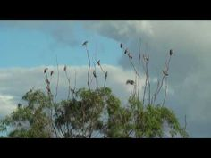 Free Stock Footage   Nature Trees Plants  01 of 60