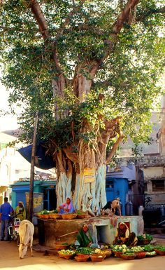 Dungarpur market, Rajasthan, India