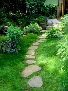 Irish Moss (Sagina Subulata) is a reasonably drought tolerant hardy plant, however will require some protection form the hot afternoon sun in Australian conditions and not the best in deep shade. Excellent between and around pavers where traffic is light.