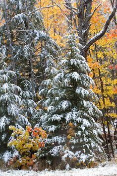 snow-and-fall-color-Michigan