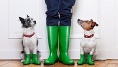 You're aware that having sure footing is essential when you're holding onto your dog's leash, especially if it's medium to large sized breed. Having a set of best waterproof dog walking boots will ensure that you have great traction in all types of weather. #best #dog #walking #boots #autumn #winter #shoes #walk #dogs #pets #list #top