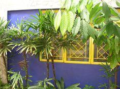 Purple Wall, Tobago (c.aks)