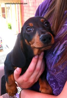 Crusoe's brother Oakley as a puppy.