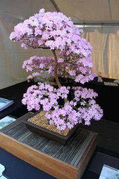 LYN . my bonsai  ♥