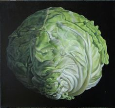 """Jane Willis Taylor. Cabbage  2004  oil on canvas  24"""" x 26"""""""